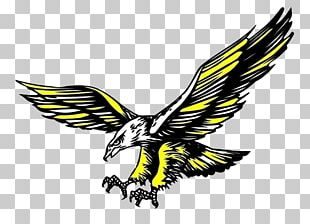 Hawk Icon PNG