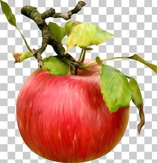 Bush Tomato Apple Vegetable Food Fruit PNG
