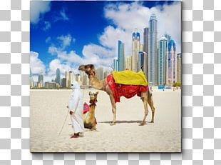 Dubai Abu Dhabi Package Tour Hotel Beach PNG