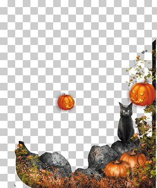 Halloween Pumpkin Decoration Jack-o-lantern PNG