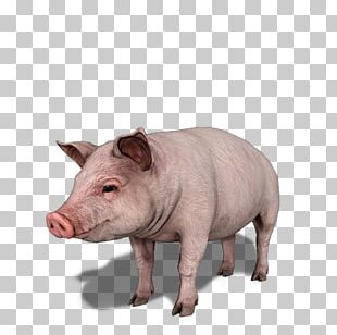 Domestic Pig Farming Simulator 17 Farming Simulator 18 Farming Simulator 16 Sheep PNG
