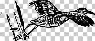 Line Art Drawing Bird PNG