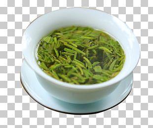 Xinyang Maojian Tea Sencha Longjing Tea Shincha PNG