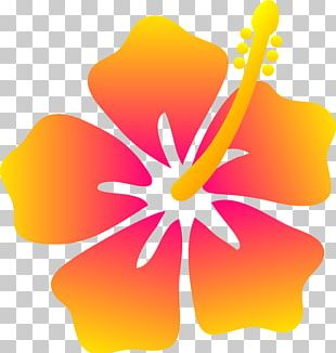 Hawaiian Flower Drawing PNG