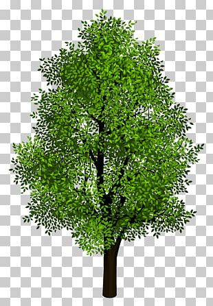 Tree Isometric Projection PNG