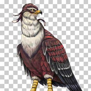 Eagle Owl Hawk Beak Feather PNG