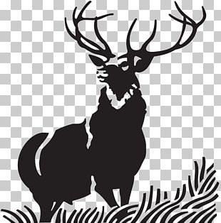 Red Deer Elk Moose PNG