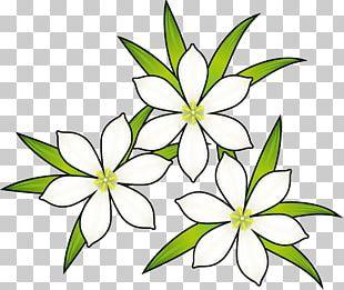 Floral Design Flower Illustration Autumn PNG