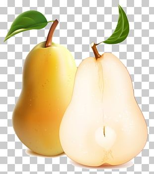 Pear Illustration PNG