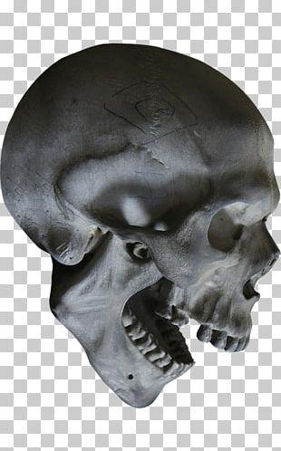 Human Skull Symbolism Skeleton Human Anatomy PNG