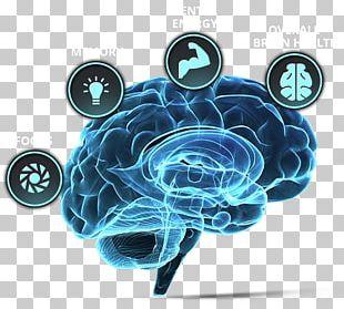 Brain Tumor Human Brain Neuroscience Forebrain PNG