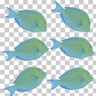 Marine Biology Marine Mammal Coral Reef Fish Fauna PNG