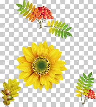 Others Sunflower Flower PNG