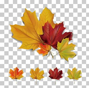 Autumn Leaves Maple Leaf Euclidean PNG