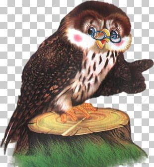 Little Owl Bird Of Prey Odnoklassniki PNG