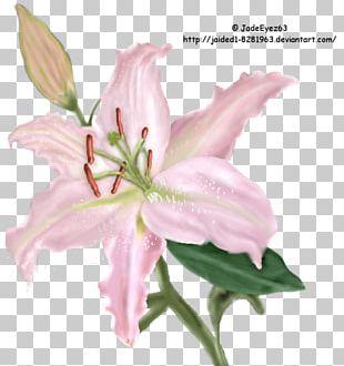 Cut Flowers Pink M Plant Stem Petal PNG