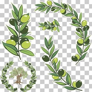 Olive Branch Olive Wreath Stock Photography Illustration PNG