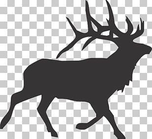 Elk Reindeer Decal Moose PNG