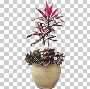 Houseplant Flowerpot PNG