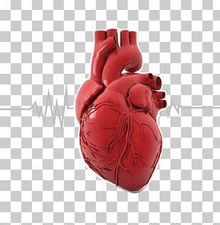 Organ Printing Heart Anatomy Human Body PNG
