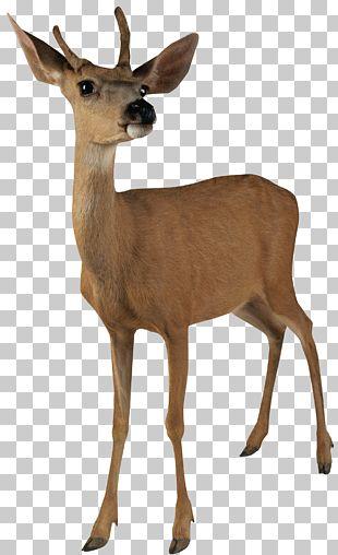 Reindeer Moose PNG