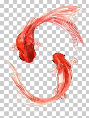 Koi Black Telescope Watercolor Painting Drawing PNG