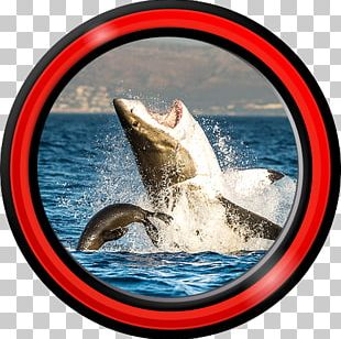 Great White Shark Animal Earless Seal Oceanic Whitetip Shark PNG