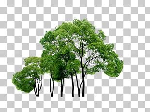 Tree Computer File PNG