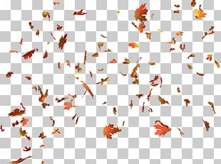 Autumn Leaf Color Autumn Leaf Color Maple Leaf PNG