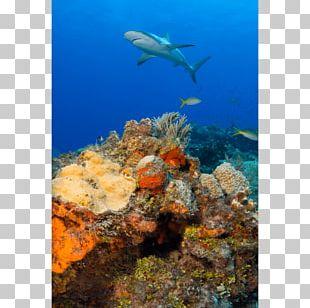 Coral Reef Fish Caribbean Reef Shark PNG
