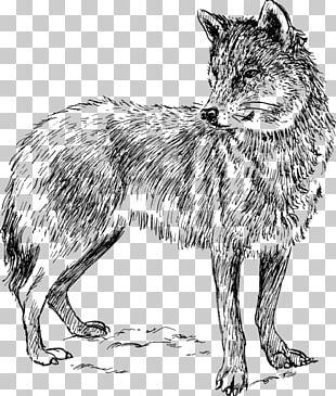 Dog Drawing Black Wolf PNG
