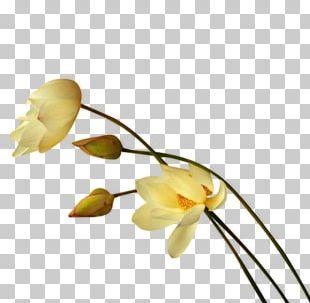 Flower Tulip Blue Rose Petal PNG