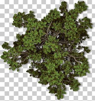 Tree Plant Autumn Shrub PNG