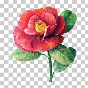 Art Painting Decoupage Floral Design Flower PNG