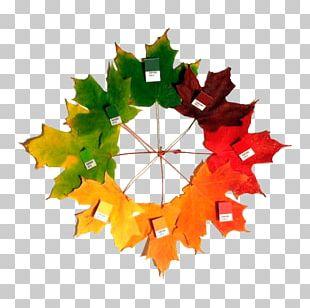 Sugar Maple Autumn Leaf Color Maple Leaf PNG