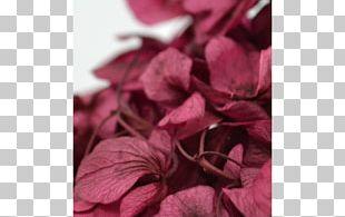 Petal Rose Family Pink M PNG