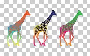 Giraffe Desktop Display Resolution High-definition Television PNG