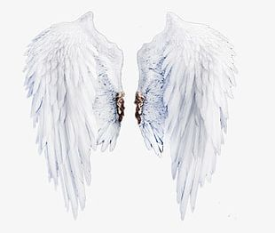 White Wings Stock PNG