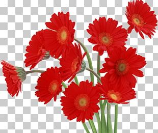Transvaal Daisy Flower Desktop High-definition Television Red PNG