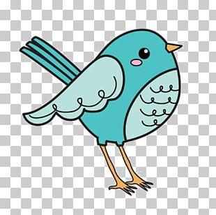 Bird Cartoon Animation Illustration PNG