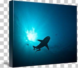 Marine Mammal Marine Biology Stock Photography PNG