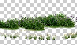 Landscaping Computer File PNG