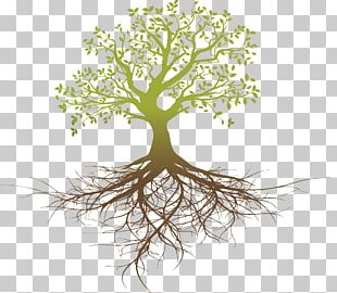 Root System Tree Oak PNG