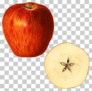 Kilogram Apple Winter Squash Weight PNG