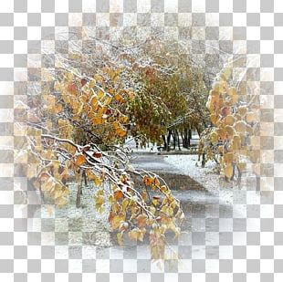Golden Autumn Child Winter Rain PNG