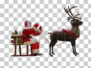 Santa Claus's Reindeer Santa Claus's Reindeer Christmas PNG