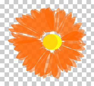 Flower Coral Reef Orange PNG