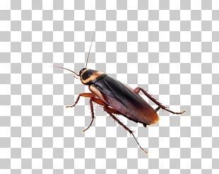 Insect Cockroach Mosquito Pest Control Bed Bug PNG