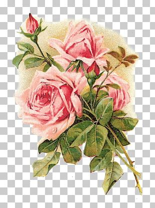 Rose Vintage Clothing Flower Pink Shabby Chic PNG