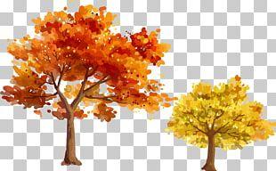 Autumn Tree Leaf PNG